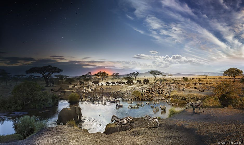 Stephen Wilkes Serengeti National Park Steppe Afrika Tierwelt Natur 24h Timelapse 24 Stunden