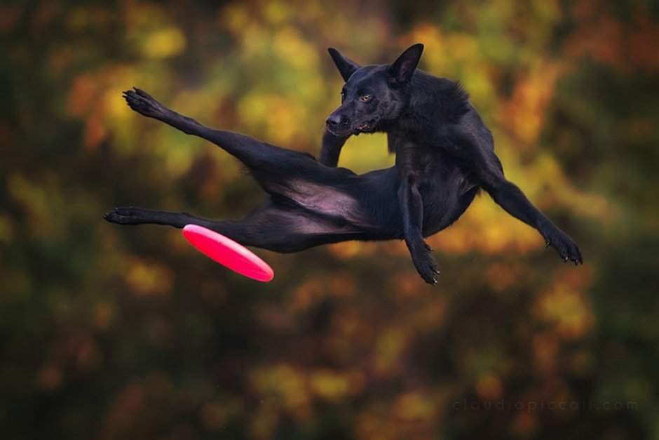 Dogs-Can-Fly-Claudio-Piccoli-02