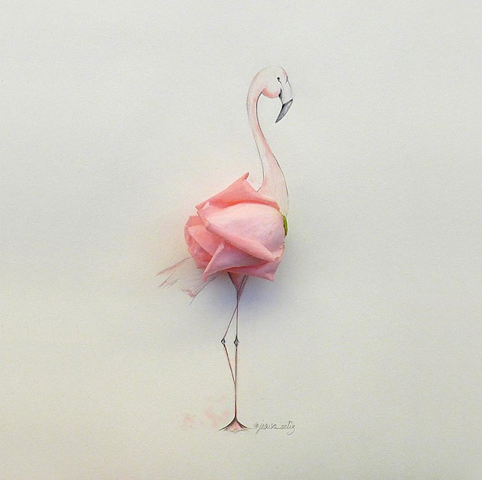 Jesuso Ortiz Illustration Flamingo Fotografie Kunst Art Rose Papier Zeichnung