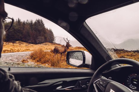 Hirsch Auto Innenraum Fenster