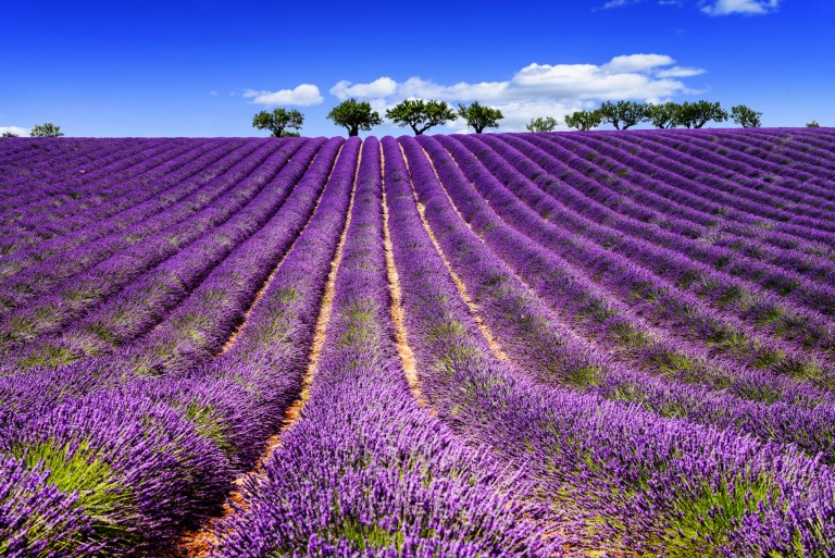 MandA Tours escorted motorhome tour: Picturesque Provence Lavender fields