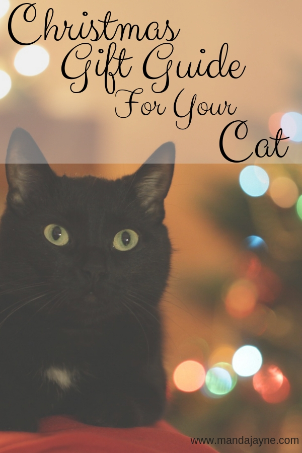 Christmas Ideas for Your Cat