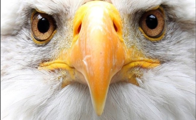 2016 081 Eagle Eyes Mandala Mandala Of The Day