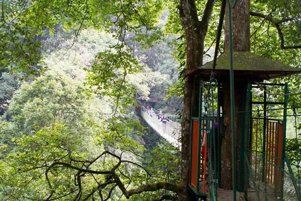 canopy trail cibodas gede pangrango