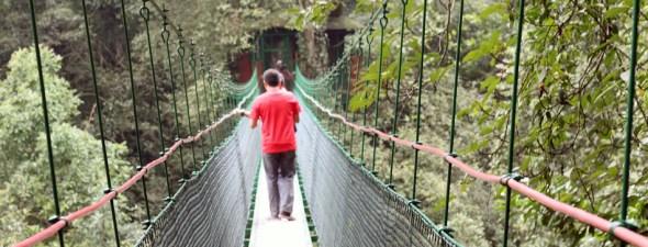 canopy trail gede pangrango