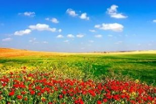 лето поле