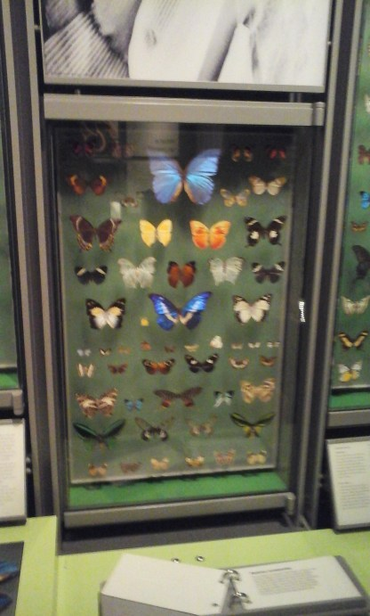 This was one of at least three different butterfly display cabinets