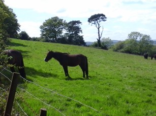 Along with the normal collection of dogs, we also found some horses this walk