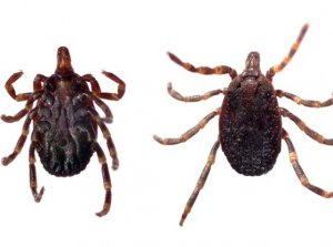 Congo Fever: Deadly ticks carrying Ebola-like virus found in UK and Europe - The Mandatory Training Group UK -