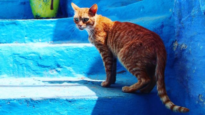 Briton dies from rabies after cat bite in Morocco - The Mandatory Training Group UK -