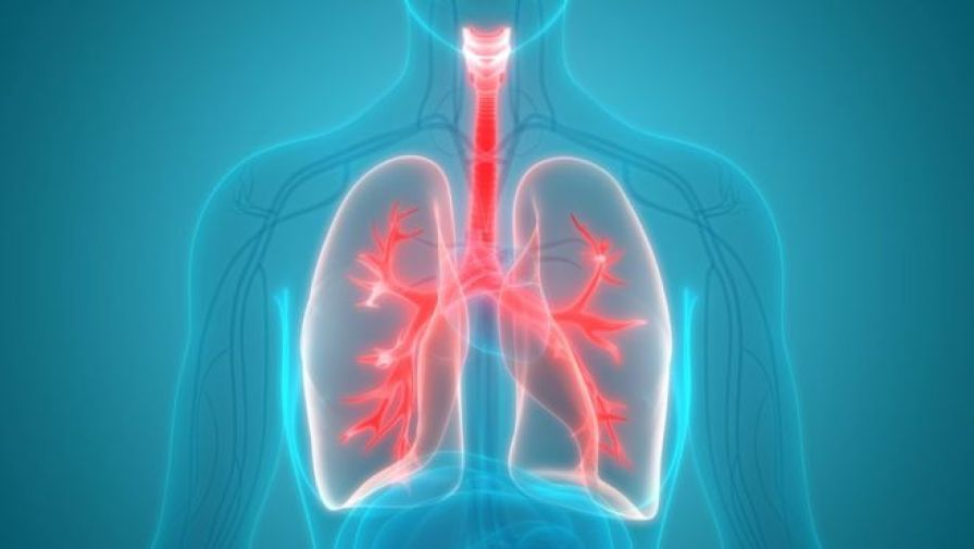 Fat found in overweight people's lungs - MTG UK