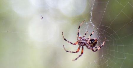 Spiders inspire double-sided sticky tape to heal wounds - MTG UK
