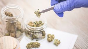 Cannabis-based medicine for epilepsy 'fast-tracked' by NHS