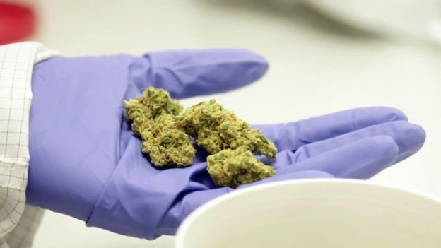 Plan for Scotland's first medical cannabis clinic in Aberdeen - The Mandatory Training Group UK -