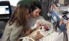 British newborn first baby in world to join cannabis therapy trial - The Mandatory Training Group UK -