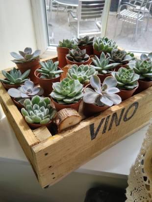 Lovely succulent plants
