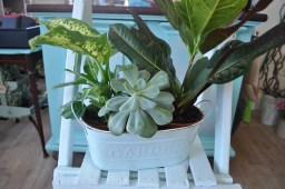 two pink plants in ceramic exclusive pot holder