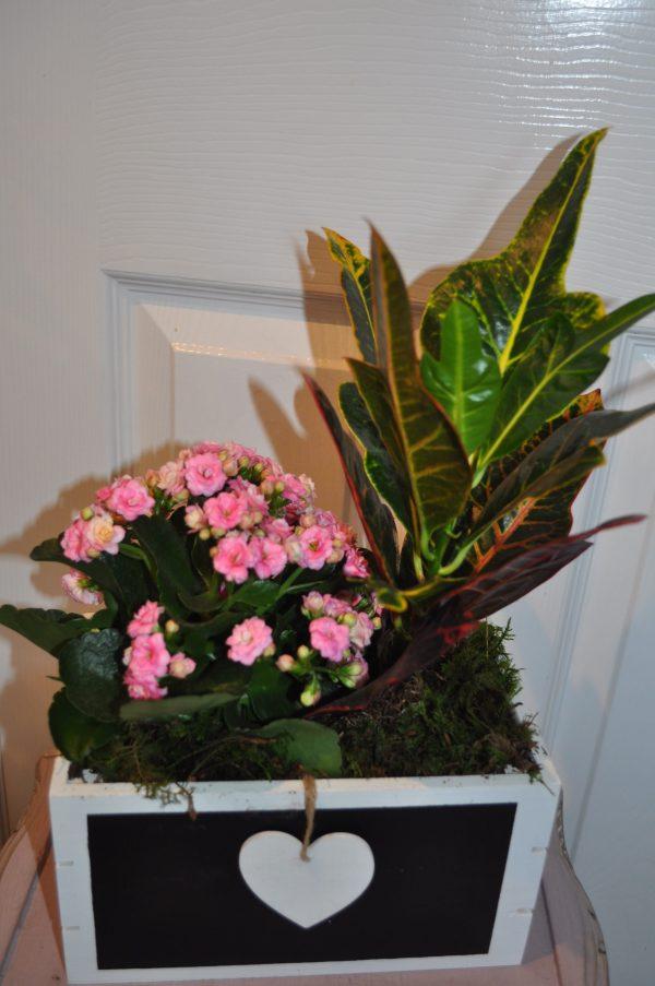 Mother's Day Indoor Planter