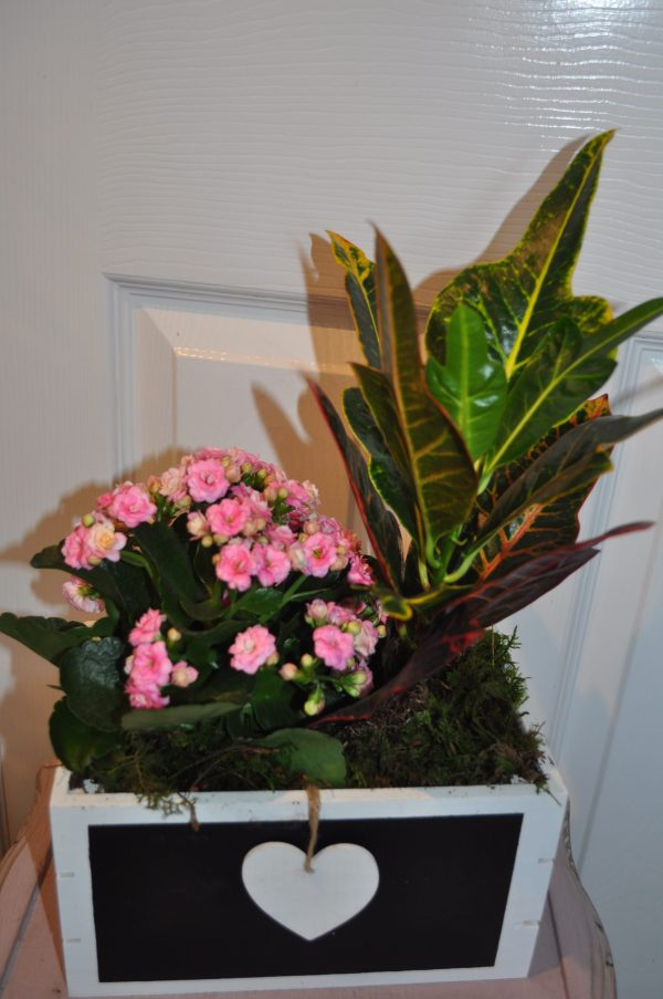 Mother's Day Indoor Planter