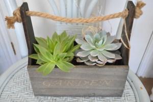 Lovely Garden Planter & Succulent Plants