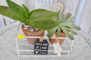 Lovely Mini Succulent & selection of plants
