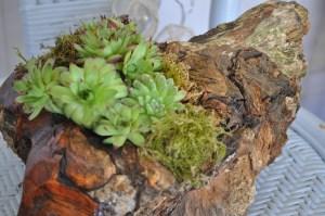 Amazing Rustic Succulent Planter