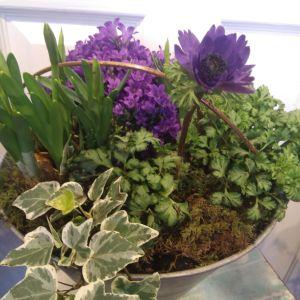 Hyacinths, Daffodils, Campanula, Anemones plant