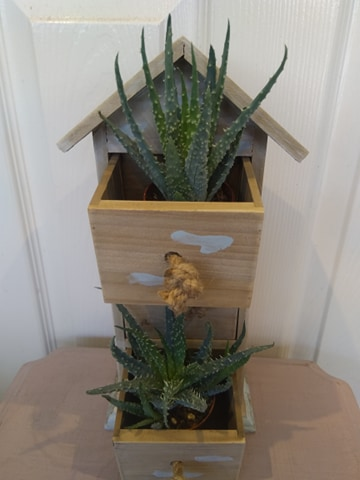 Wooden house-shaped drawer with succulent