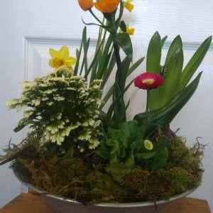 Mixed spring bulb planter