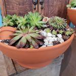 Beautiful Terracotta Planter