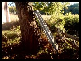 a_ladder_leading_to_beauty
