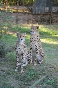 Zoo Pretoria - Juillet 2016
