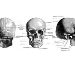 Inside Skull Diagram Wiring Alternator Art Great Installation Of Mandy Boursicot Canadian Artist Rh Mandyboursicot Com Drawings