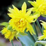 Gardening news, Sept 16