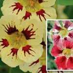 Thompson & Morgan's flower seeds 2017