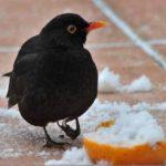 RSPB's Big Garden Birdwatch 2017