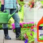 Blast weeds naturally with ecofective