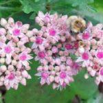 B&Q bans neonicotinoids on flowering plants