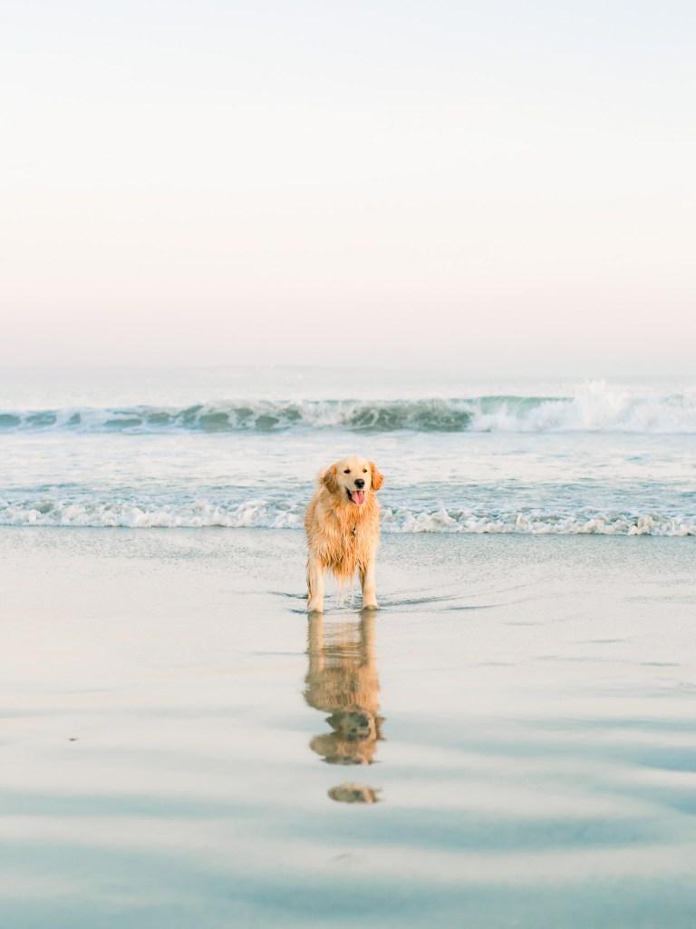 Coronado Family Photographer At Dog Beach