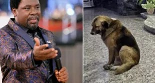 wpid wp 1459154597517 - VIDEO: Man 'turned into a Dog' During Deliverance Session At TB Joshua's Church