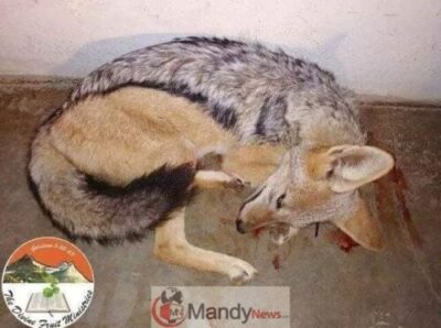 Apostle kills dog3 - Pastor Kills Canine And Eats The Uncooked Meat Throughout Reside Service (Photographs)