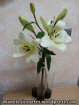 flors tenyides i observades 04