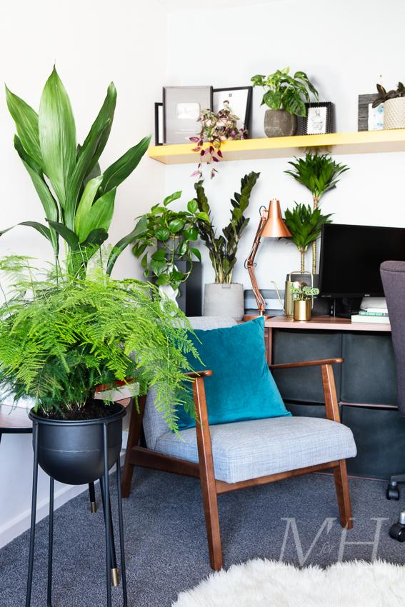 the-joy-of-plants-home-transofrmation-man-for-himself4