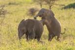 Elefanten Serengeti-feb 2017-4-2