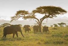 Elefanten Serengeti-feb 2017-8-2
