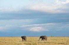 Elefanten Serengeti-feb 2017-9-2