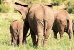 Elefanten Tarangire-2017-2-2