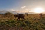 elefantenherde Serengeti 2017-2-2