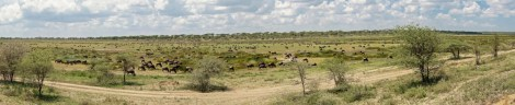 Panorama Ndutu-Serengeti 2017 Migration-1-2