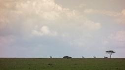 Waking Safari Serengeti 2017-2-2